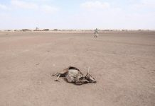 When water is all you need, surviving in Somalia