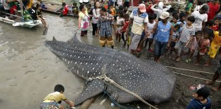 Sharks and rays 'starved and suffocated' by plastic debris