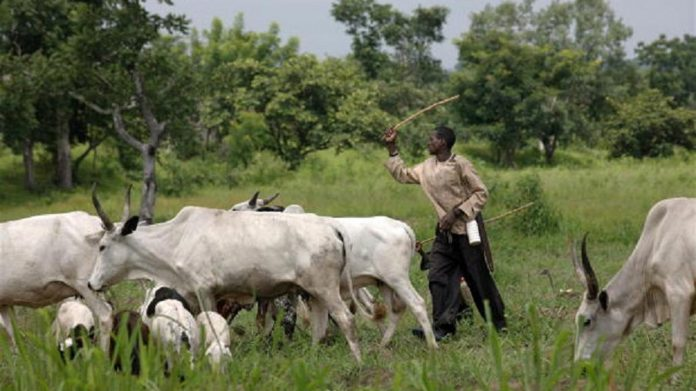 Nigeria's Plateau govt may ban open grazing