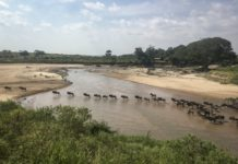 sky news africa Virus keeps tourists from Africa's great wildlife migration