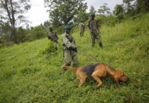 sky news africa 6 rangers killed in latest attack at Congo's Virunga park